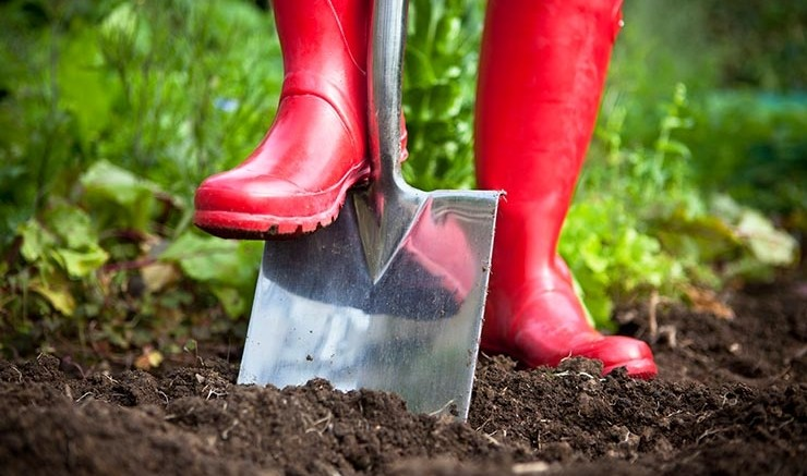 Tips to get your summer garden started