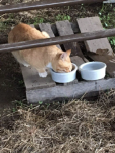 Stray cat living at Ag Complex gets a new home